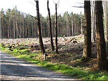 J3630 : A clear fell section of Donard Wood by Eric Jones