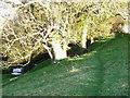 NZ2809 : Footpath, Spa Beck by Maigheach-gheal