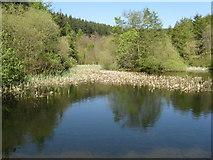 NT2840 : Pond in Glentress by M J Richardson