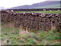 SE0899 : Drystone wall near Marrick by Maigheach-gheal