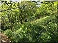 SW9980 : Woodland above Pine Haven by Derek Harper