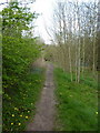 SD3483 : Footpath along side River Leven at Low Wood Bridge by Alexander P Kapp