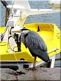 W6449 : Heron Kinsale by Sarah Smith