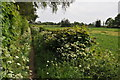 SO8548 : Footpath at Kempsey by Philip Halling