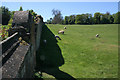 SK9226 : Elizabethan wall, Easton Walled Gardens by Kate Jewell