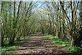 SJ4161 : River Dee riverside walk near Eaton Hall by Jeff Buck