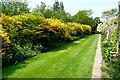 TQ8038 : Walk at Sissinghurst Castle Gardens by Graham Horn