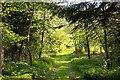 SU7591 : Track to a field by Steve Daniels