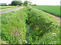 TA3720 : Drainage ditch beside Out Newton Road by JThomas