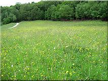 SJ8959 : Looking over the meadow by Jonathan Kington