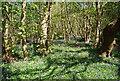 TQ3850 : Bluebells, Round Wood by N Chadwick