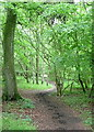 SU7591 : In Turville Wood by Graham Horn