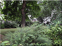 TQ2878 : The gardens in Chester Square, London by John Lord