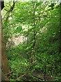 NS8691 : Woodland, Throsk by Richard Webb