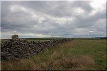 NZ7814 : Wall, Newton Bank by Mick Garratt