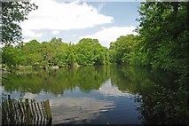 TL7604 : Top Lake Danbury Country Park by Glyn Baker