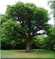 TQ4095 : Grimston's Oak, Epping Forest by Roger Jones