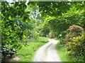 SW9641 : Footpath through the gardens on Caerhays Estate by Rod Allday