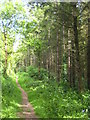 SX3773 : Path on the edge of conifer plantation near Old Mill by Rod Allday