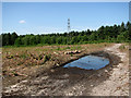 TG4600 : Puddle on track through Fritton Wood by Evelyn Simak