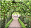 ST5071 : Pergola, Rose Garden, Tyntesfield by Derek Harper