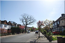 TQ3765 : Copse Avenue by N Chadwick