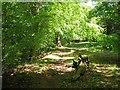 NT3369 : Path, Dalkeith Park by Richard Webb