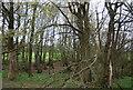 TQ0930 : Coppiced woodland by N Chadwick