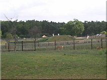 SE6301 : Yorkshire Wildlife Park by JThomas