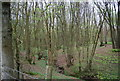 TQ0930 : Small wooded valley in Tittlesfold Copse by N Chadwick