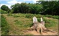 SP4704 : Tree Stump Seats by Des Blenkinsopp