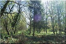 TQ4251 : Limpsfield Common by N Chadwick