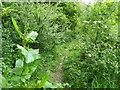 ST7935 : Bridleway near Norton Ferris by Maigheach-gheal