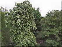 TQ1876 : View from Xtrata treetop walk by Paul Gillett