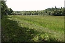 SS8116 : Meadow in the Little Dart valley by Derek Harper