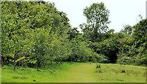 J4681 : Field and trees, Crawfordsburn Country Park (6) by Albert Bridge