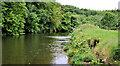 J3370 : The River Lagan, Moreland's Meadow, Belfast by Albert Bridge