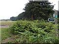 TM2544 : Bridleway to Waldringfield Heath by Geographer