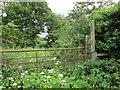 SJ4472 : Overgrown footpath at Wimbolds Trafford by Jeff Buck
