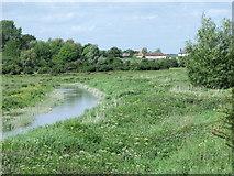 TQ5203 : Cuckmere River north of Alfriston (2) by nick macneill
