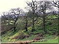 SE6795 : Wild Daffodils, Farndale by Maigheach-gheal