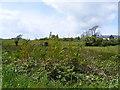W0329 : Rough grazing - Lissakee Townland by Mac McCarron