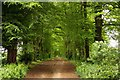 SP5706 : Tree lined bridleway to Old Road by Steve Daniels