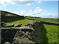 SJ9979 : Dry stone walls on Taxal Moor by Peter Barr