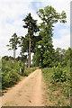 TL1848 : Track Across Heathland by Martin Addison