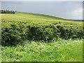 NT9542 : Barley field, Jacks Law by Richard Webb