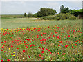 TG4905 : Cultivated fields east of Burgh Castle by Evelyn Simak