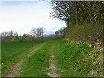 NZ2114 : Track, Gatehouse Plantation by Maigheach-gheal