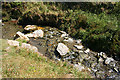 SX0789 : Tintagel: stream in Rocky Valley by Martin Bodman