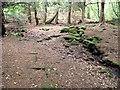 "SJ8955 : The ""Druids' Grove"" by Jonathan Kington"